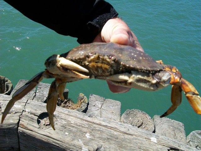 Crabbing on Camano Island