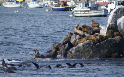 Camano Island Wildlife
